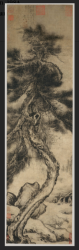 Long, slim hanging scroll painting in ink of a pine tree with a sinuous trunk